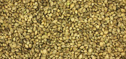 Hemp Organic Seeds